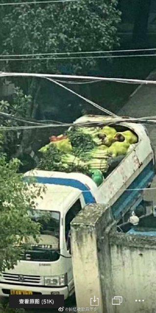 當地網民發現,當局同樣用垃圾車運輸蔬菜等食品 武漢肺炎 武漢肺炎守不住-武漢2020年01月23號10點 封城 1583934919 72fe 319x640